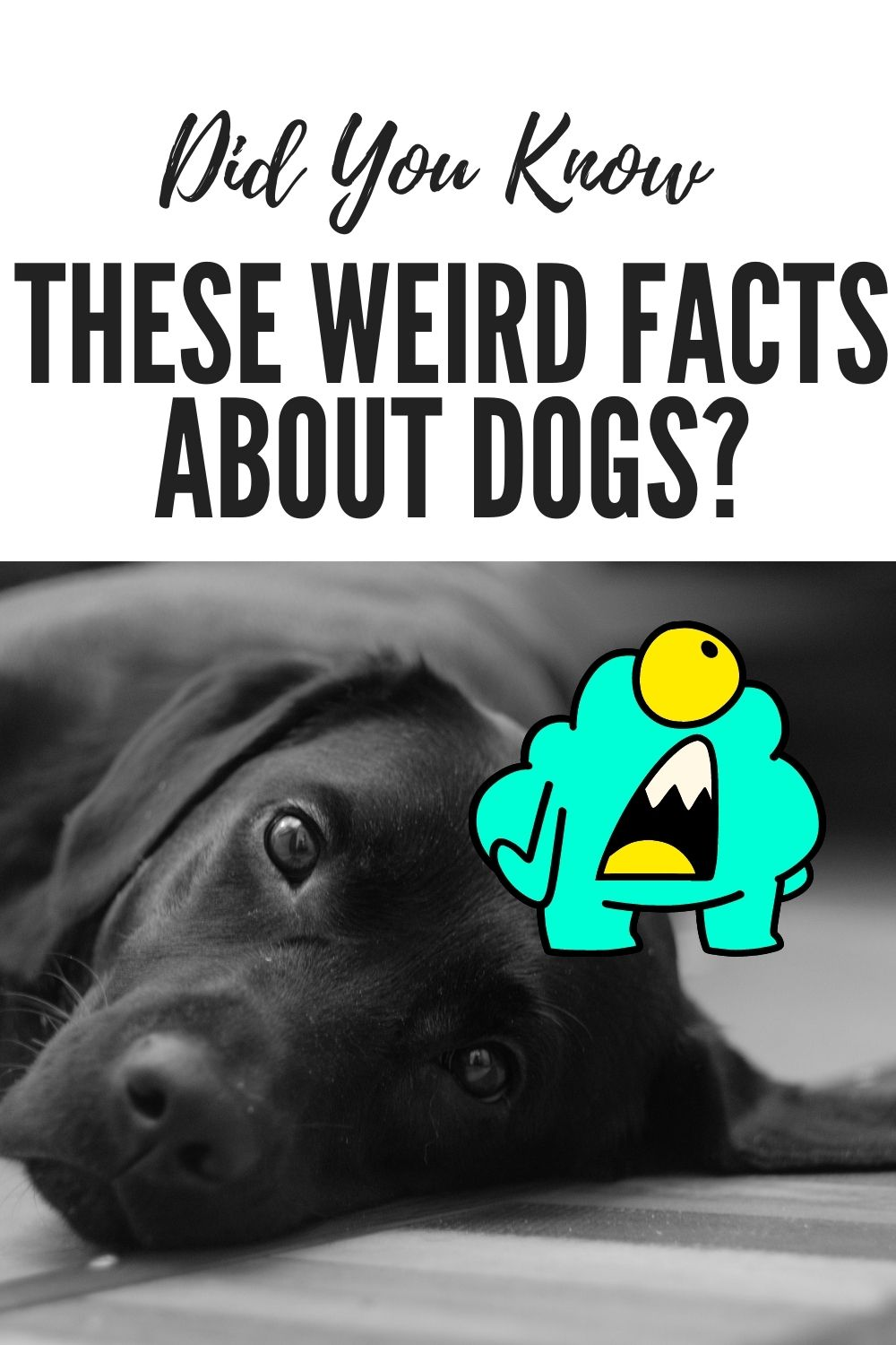 Did You Know These Weird Facts About Dogs?