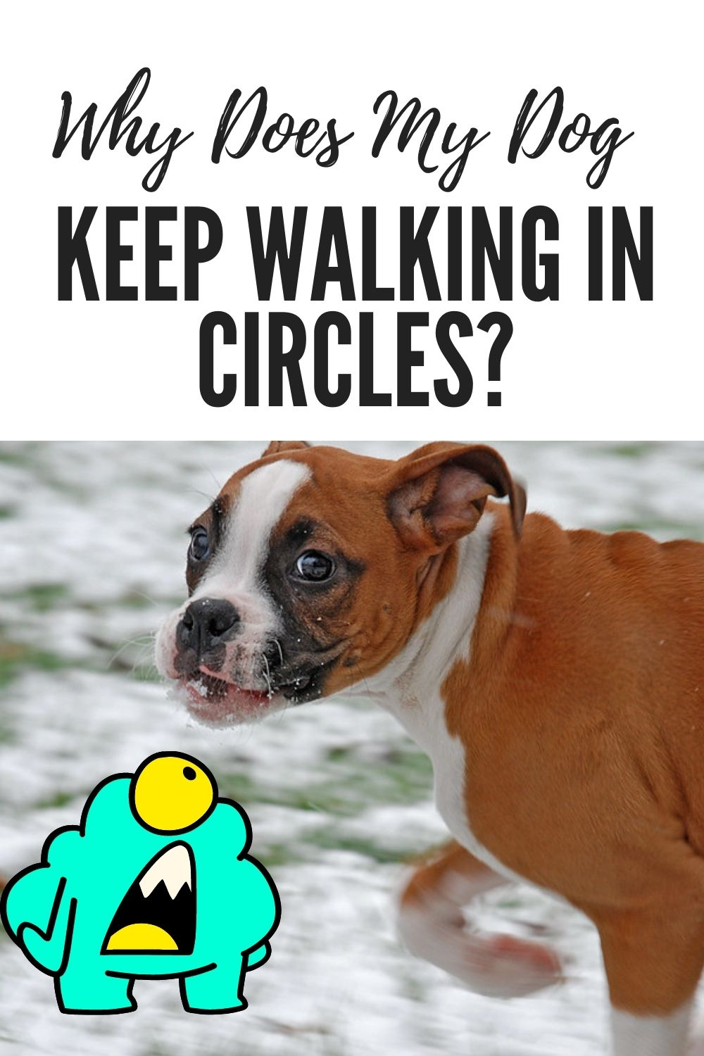 Why Does My Dog Keep Walking in Circles?