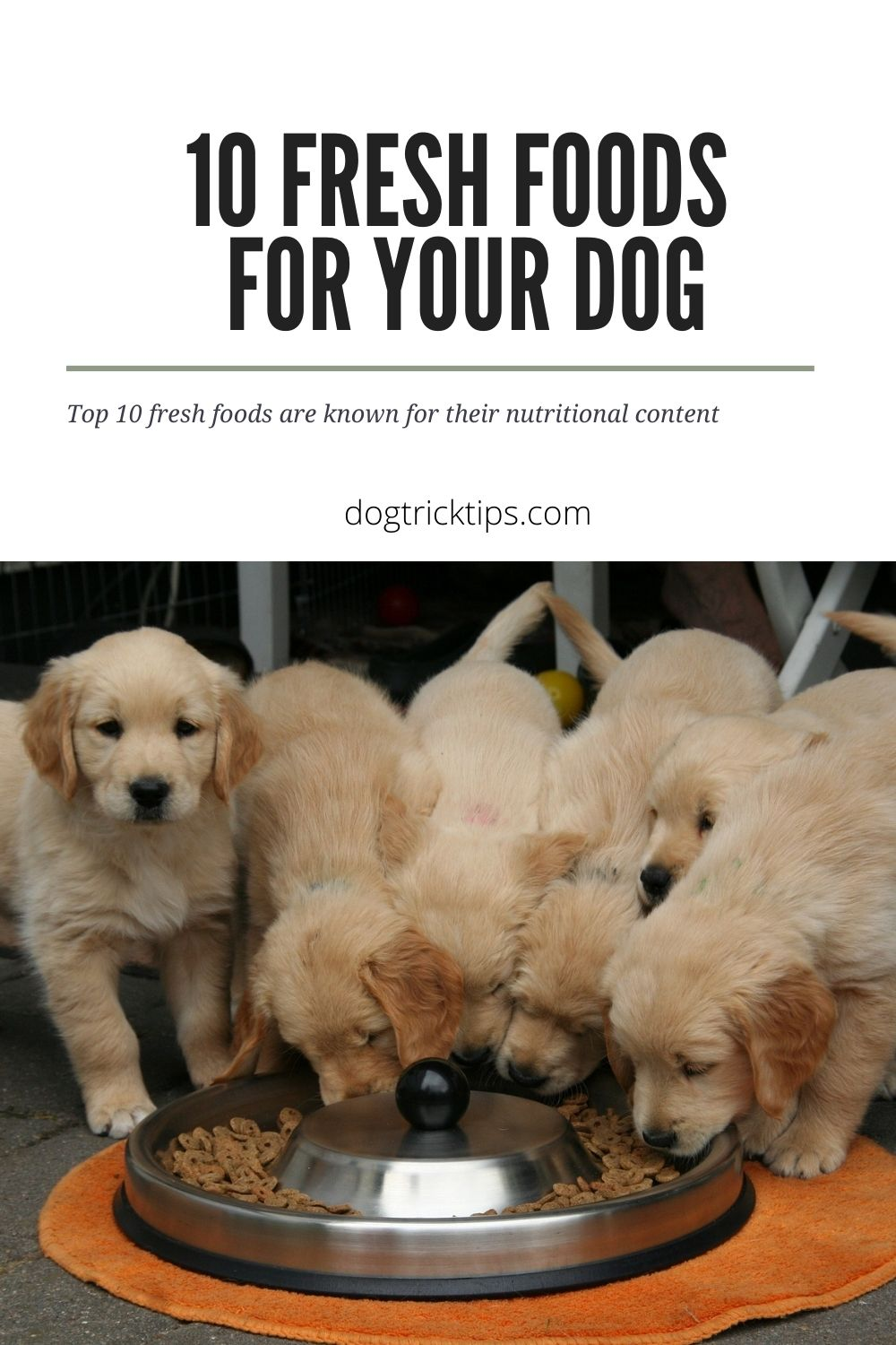 10 Fresh Foods For Your Dog That Promote Health And Cure Common Aliments
