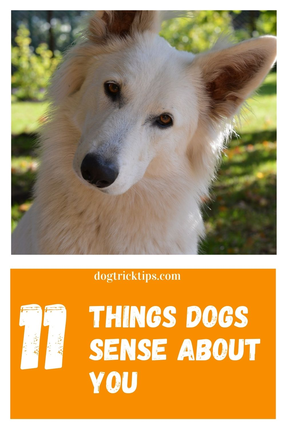 11 Things Dogs Sense About You