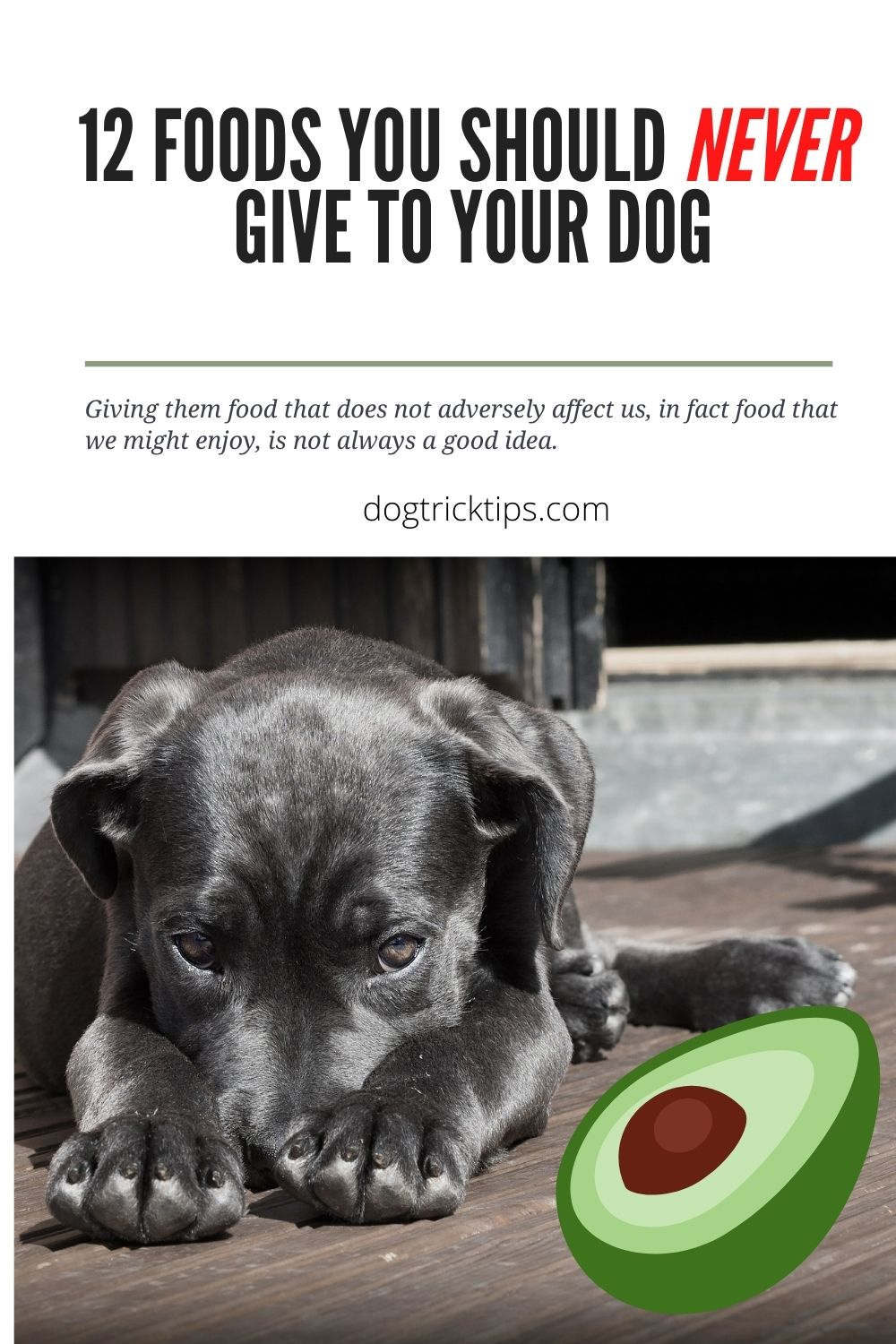 12 Foods You Should Never Give To Your Dog