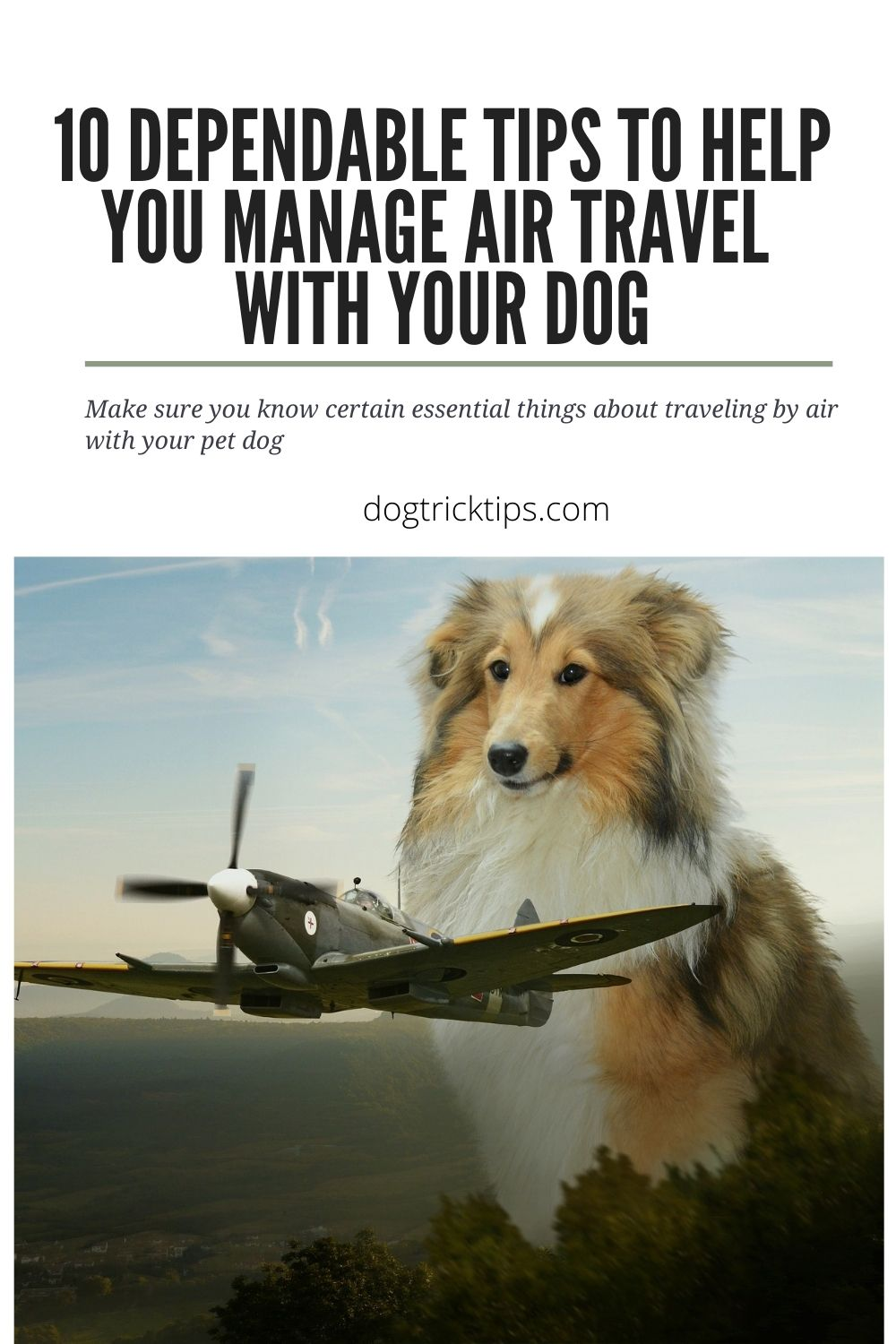 10 Dependable Tips To Help You Manage Air Travel With Your Dog