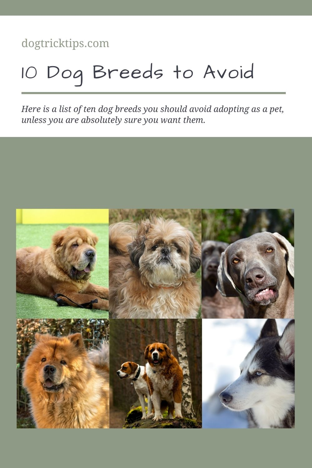 10 Dog Breeds to Avoid At All Costs
