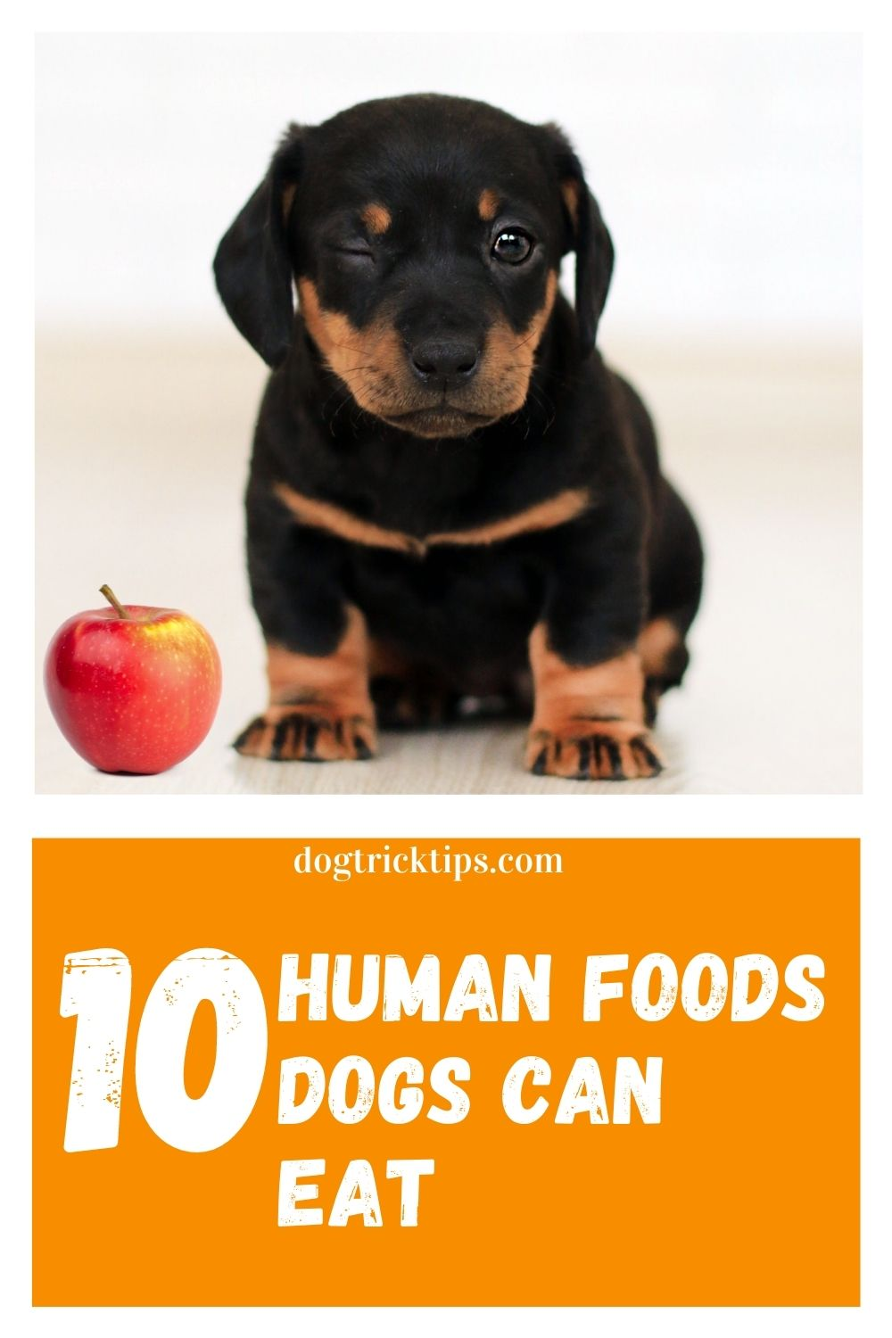 10 Human Foods Dogs Can Eat