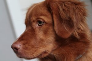 Whiskers help your dog's vision