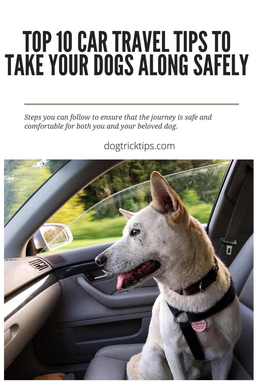 Top 10 Car Travel Tips to Take Your Dogs Along Safely