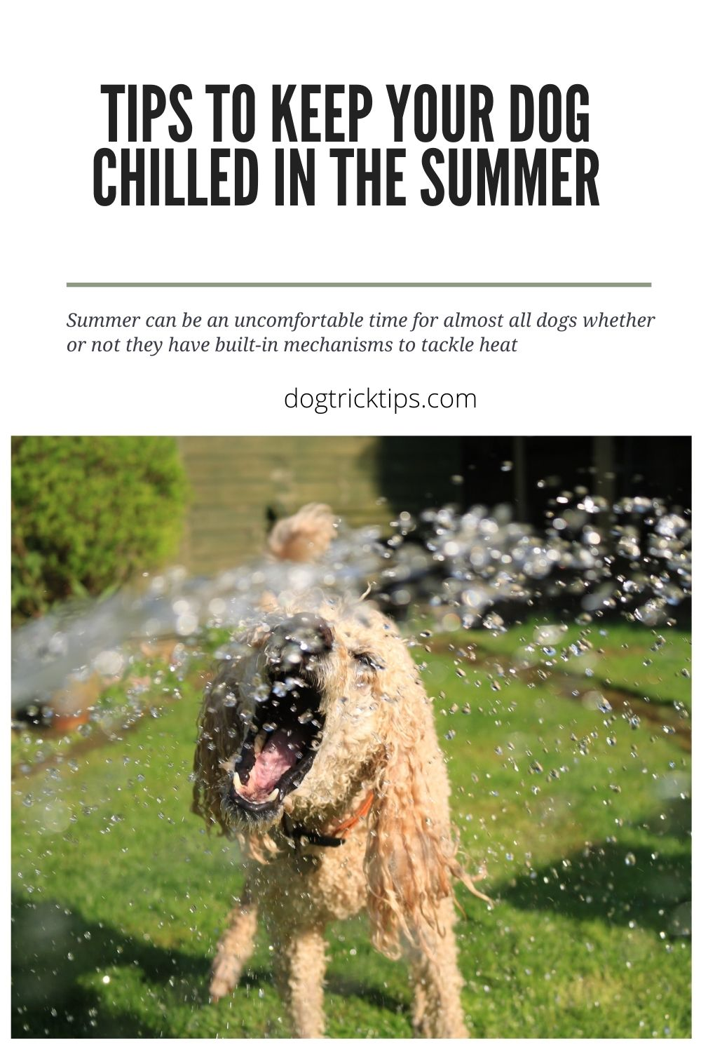 Tips To Keep Your Dog Chilled in the Summer